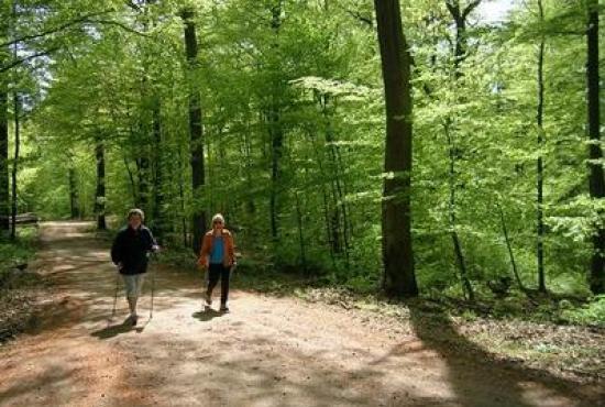 Location de vacances en Ronshausen, Hessen - Promenade dans les environs