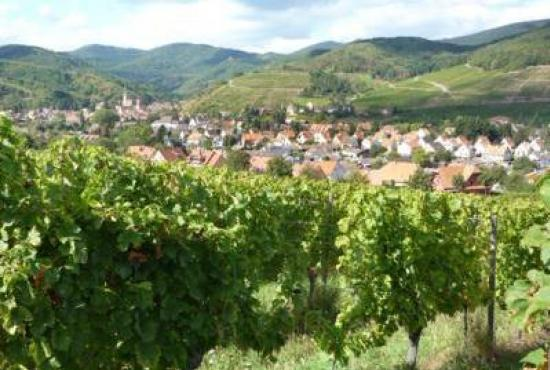 Holiday house in Nothalten, Alsace - Andlau