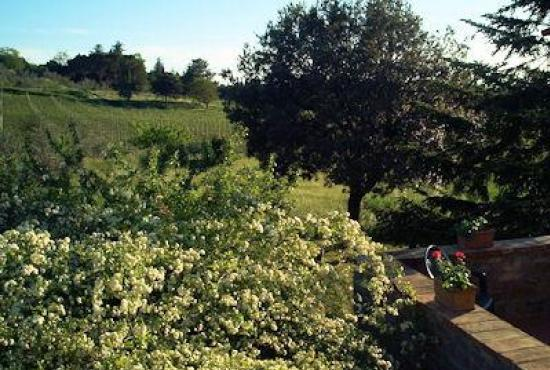 Holiday house in Ossaia, Tuscany - View from the terrace