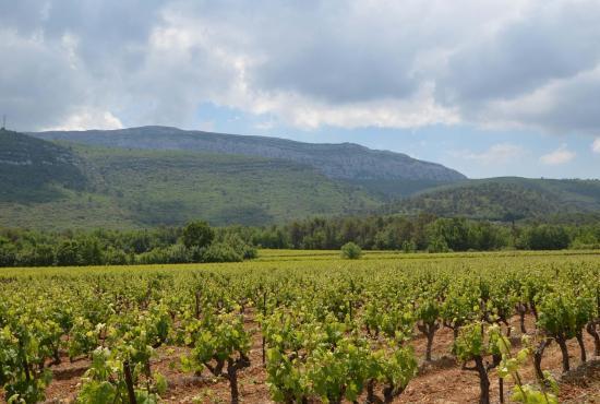 Vakantiehuis in Nans-les-Pins, Provence-Côte d'Azur - Nans les Pins - landschap