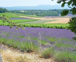 Casa vacanze in Bollène, in Provence-Côte d'Azur.
