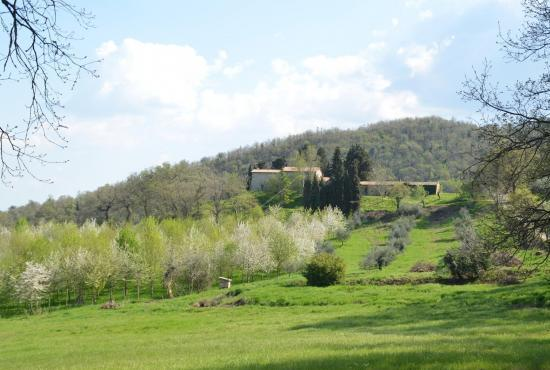 Holiday house in Palazzone, Tuscany - House in landscape
